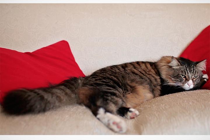 el gato spot anuncio publicidad television pepephone